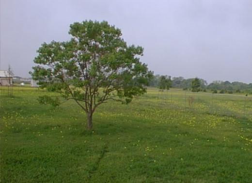 Texas 2001