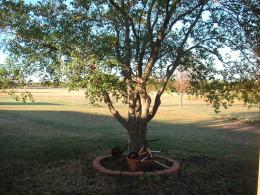 Texas 2011