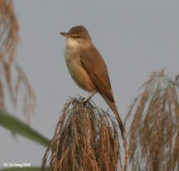 Taken in Kokalta, West Bengal India.