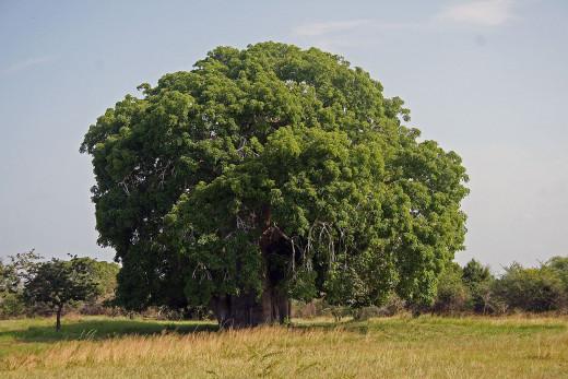 Taken in Tanzania