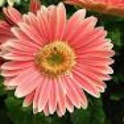 Mandi L623 profile image