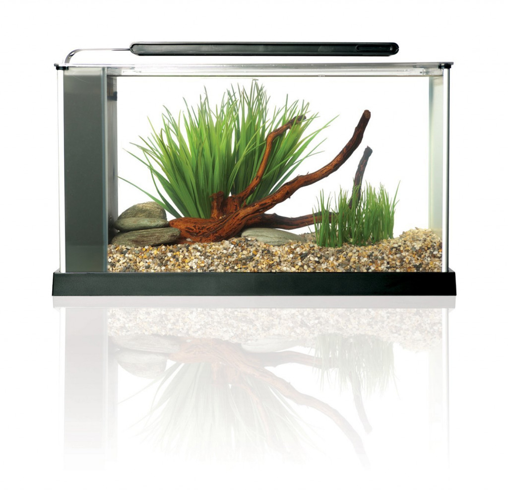 Betta fish tank ideas for your home or office for Cool betta fish tanks