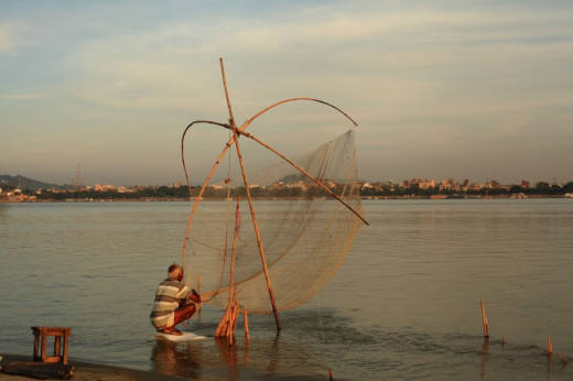 Brahmaputra River is home to one of the largest freshwater fishes found across the globe