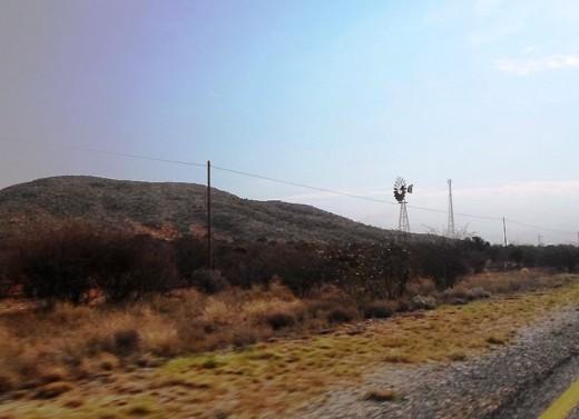 Thorn trees growing dense in some areas in the Kalahari Desert © Martie Coetser