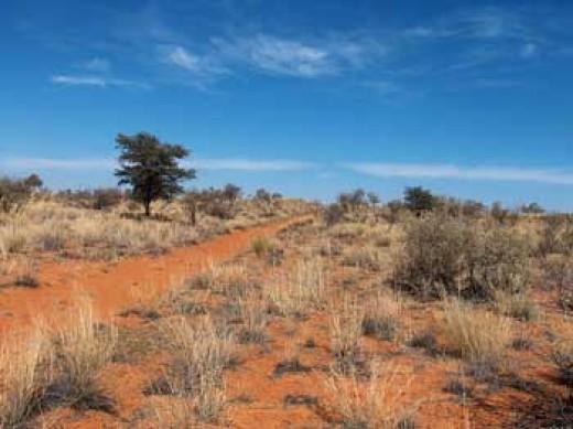 Kalahari Desert, South Africa