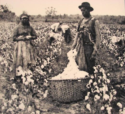 Slaves On A Cotton Plantation