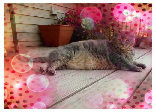 """Overlay from """"Pizap"""""""