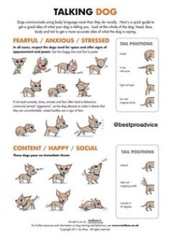 Understanding canine body language.