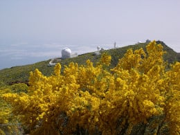 Growing near the La Palma Observatory
