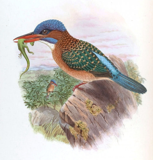 John Gould's Birds of Asia.