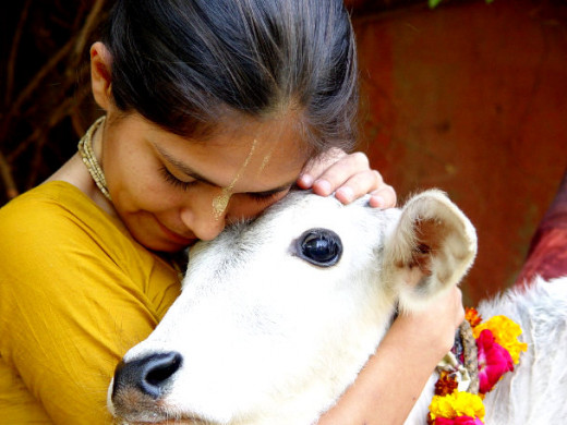It is just too Hindu to love a cow.