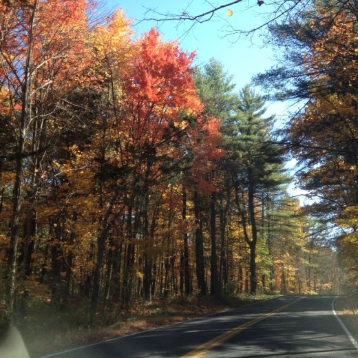 Even through my car window the colors are beautiful.