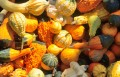 Exploring Winter Squash: There's More to Life Than Pumpkin Spice.