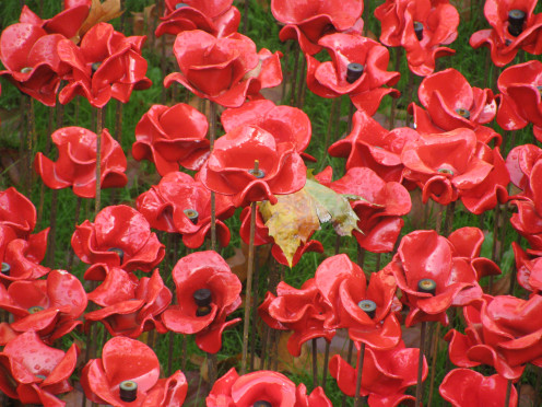 Ceramic poppies at the Tower of London (Art Installation)