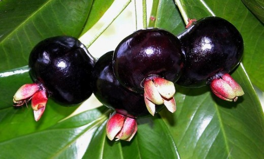 Do You Know this Fruit?