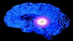 Pineal Gland - God Organ or just another squishy thing in your brain?