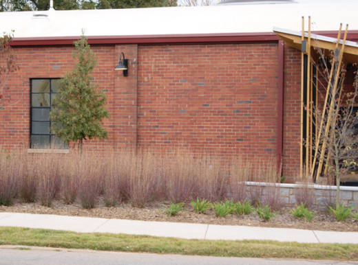 Native grasses in a planting bed