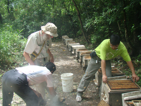 Taiwanese beekeepers harvesting honey and royal jelly.