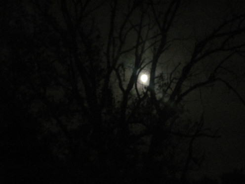 Does a Full Moon have the Ability to Change Human Behavior?
