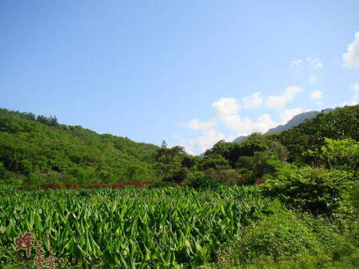 Taiwan Easter Region: clean, no pollution and rich in agricultural products.