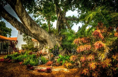 Banyan -or peepal-tree
