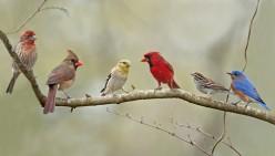 Survivor: A Winter Day In The Life Of a Wild Bird