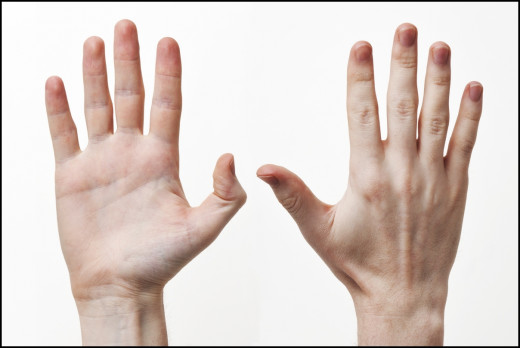 left (palm); right (opisthenar)
