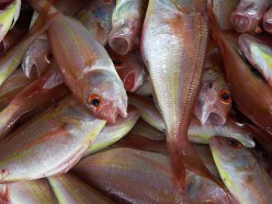 How To Buy Fresh Fish At The Fish Market
