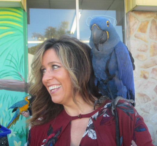 Hyacinth macaw and friend in Burlington, NJ. - Photo by George Sommers
