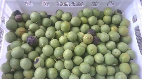 Walnuts picked in September.