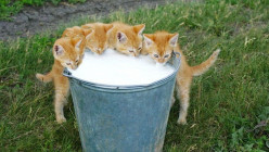 7 Habits of Highly Effective Kittens