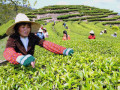6 Interesting Facts About Chinese Tea