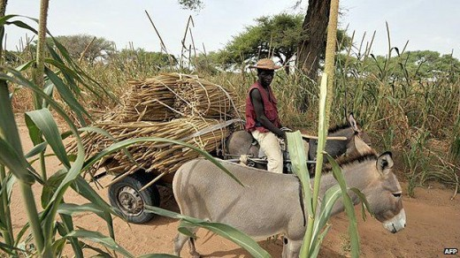 A Farmer in Burkina Faso