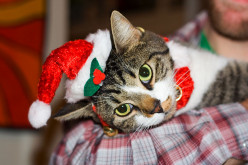 How to Take the Perfect Holiday Pet Photo