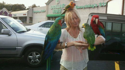 Got parrots? Lisa Jasiel from VA visits with parrots belonging to a man from California who drives around with flock in tow ..