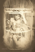 A Bird in a Cage: A Slow Fade (Lyrical Poetry)