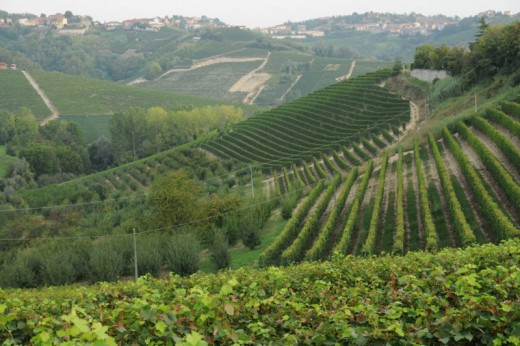 Vineyards from Mompellini, Canale, Roero