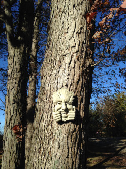 Tree Faces and Forest Faces