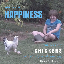 "Backyard Chickens From ""Scratch"" 