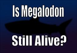Megalodon Sightings: Is the Megalodon Shark Still Alive?