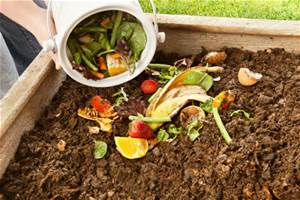As you can see, composting consists of the many things we just throw away to become something valuable.