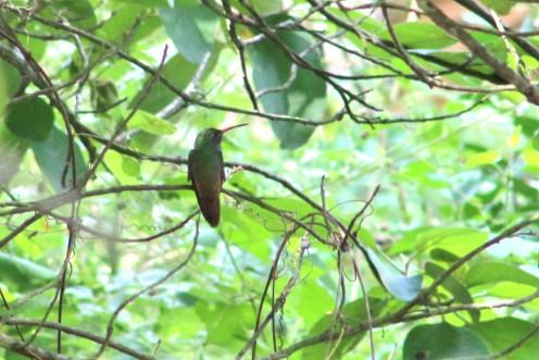 Estero Llano hummingbird garden