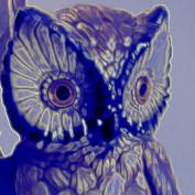 Stolas profile image
