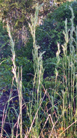 Take a Walk Anywhere to Enjoy The Earth's Beauty: A Weed is not Just a Weed~~~Wild Grasses Too Enchant Us...