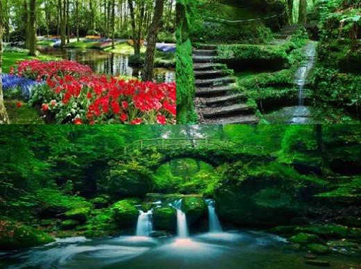 Secret Garden and Rainforest