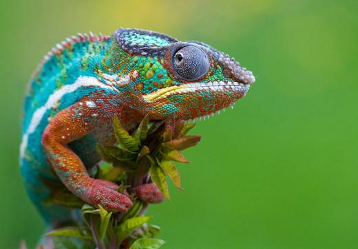 MR. Chameleon-Master of Colors