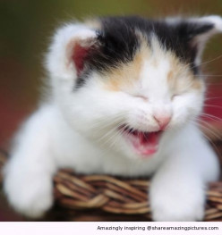 How do you think it could change things if kittens could giggle?