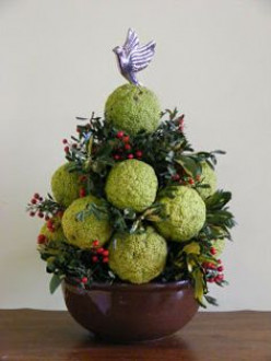 Hedge apple Christmas tree made by arranging fruits in a florist's bowl with greenery added.