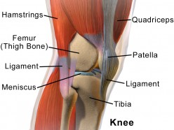 Everything You Wanted to Know About Knee Arthroscopy