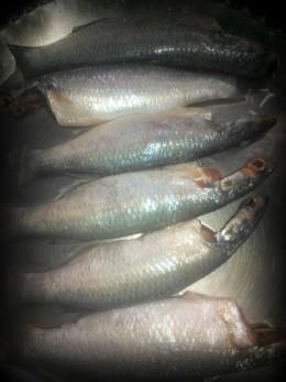 Raw Parse Fish